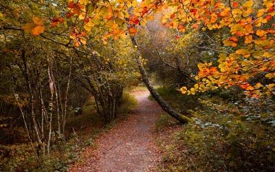 Chemin automne puy de Sarcoui